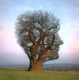 tree-shaped-like-head